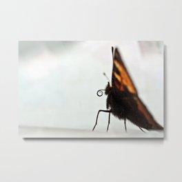 Large Tortoiseshell - 111 Metal Print