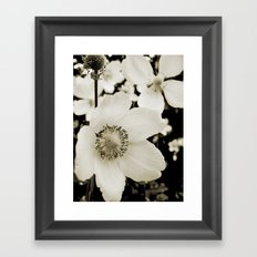 white anemone Framed Art Print