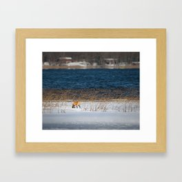 Red Tail Fox on Fish Hook Lake Framed Art Print