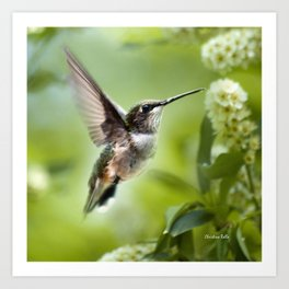Hummingbird Love Art Print