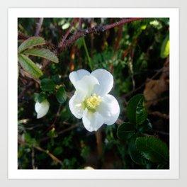 flower and light - White flower 2 Art Print