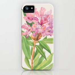 California Rose Bay Rhododendron Botanical Print, Mary Vaux Walcott iPhone Case
