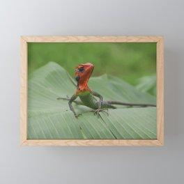 Gecko iguana Red Head Framed Mini Art Print