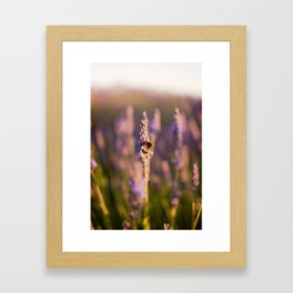 The nectar collector  Framed Art Print