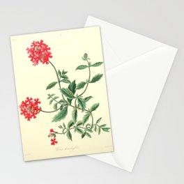 Roscoe, Margaret (1786-1840) - Floral Illustrations of the Seasons 1831 - Verbena Chamaedrifoli Stationery Cards