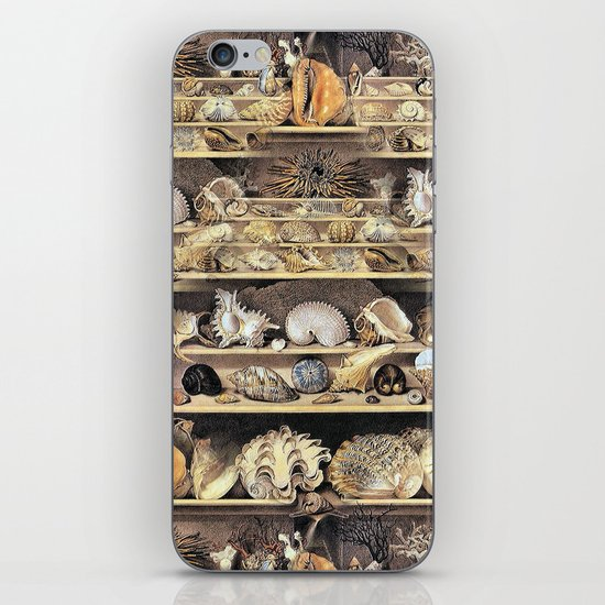 Vintage Shell Collection iPhone & iPod Skin