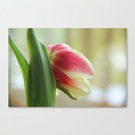 Tired Tulip II Canvas Print