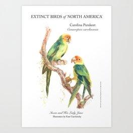 Extinct Birds: Carolina Parakeet Art Print