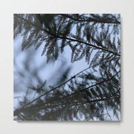bald cypress 03 Metal Print