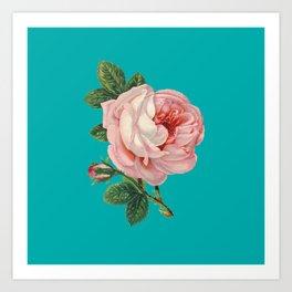 Pink Flower on Teal Art Print