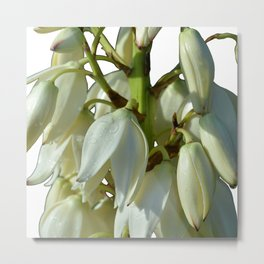 white flowers on white Metal Print