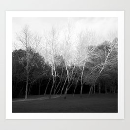 black and white grove of woods Art Print