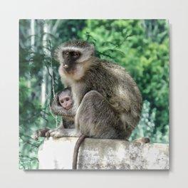 Vervet monkey mom and baby Metal Print