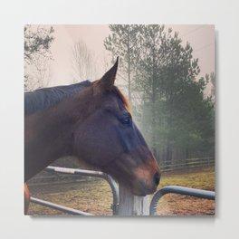 Foggy Morning Horse Metal Print