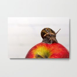 A common snail crawls on a red apple Metal Print