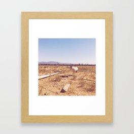 Cabos Framed Art Print