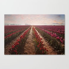 tulips forever Canvas Print