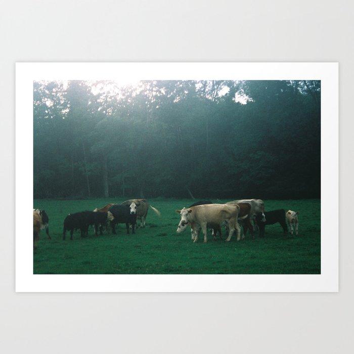 Cowz Art Print