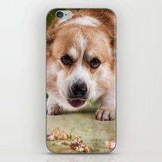 I have to hurry before she sees me.............. iPhone & iPod Skin