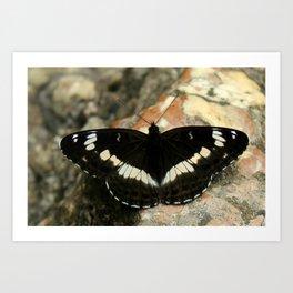 Butterfly on a Rock Art Print