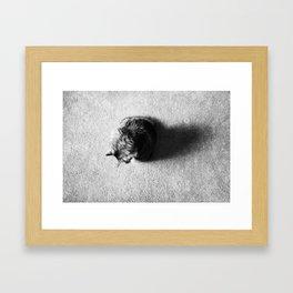 Aesthetic Black And White Cat 2 Framed Art Print