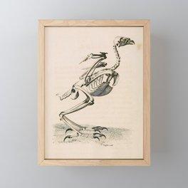 001 Goshawk falco palumbarius Framed Mini Art Print