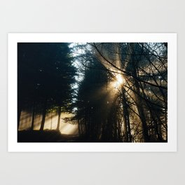 Through the fog and branches Art Print