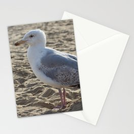 Seagull Close-up Stationery Cards