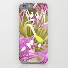 Caper Flower Blossom iPhone 6s Slim Case