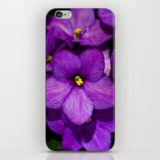 Saintpaulia 8624 iPhone & iPod Skin