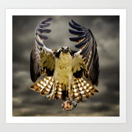 Osprey with fish Art Print