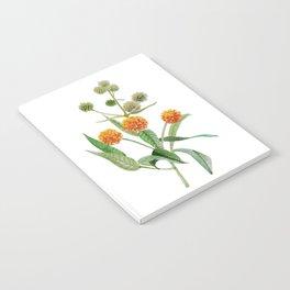 Matico Notebook