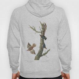 Brown creeper, Birds of America, Audubon Plate 415 Hoody