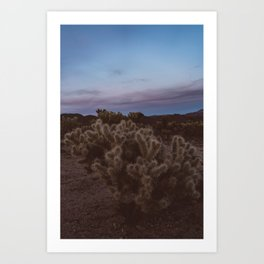 Cholla Cactus Garden VIII Art Print