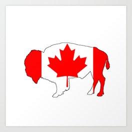Canada Bison Art Print