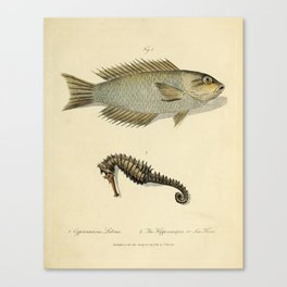 Fish and sea horse by Sarah Stone, 1790 Canvas Print
