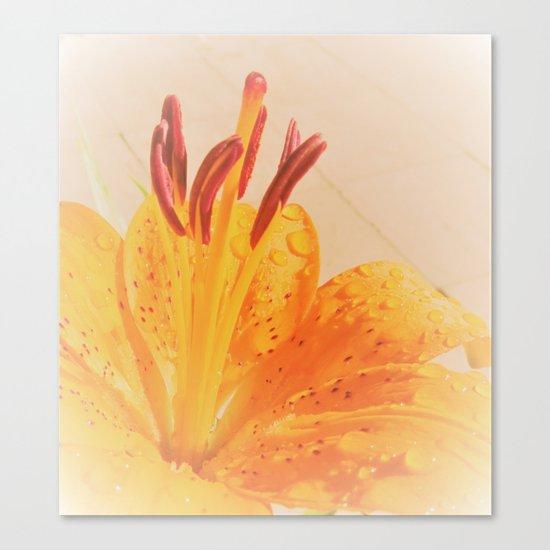 orange lilie Canvas Print