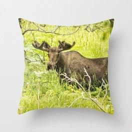 Bull Moose in Kincaid Park, No. 2 Throw Pillow