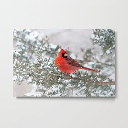 Winter's Beauty Cardinal Metal Print