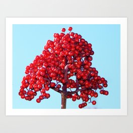 Rowan Berry Branch Top is Red on  Blue Nature Art Print