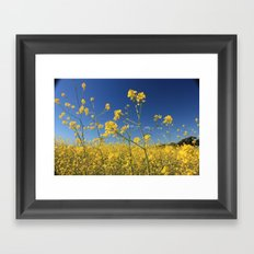 mustard flowers Framed Art Print