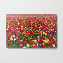 Wicked Tulips Farm, Rhode Island Metal Print