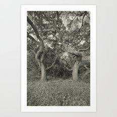 Caduceus Unbound Art Print