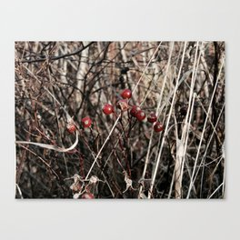 Thorned Berries of Winter Canvas Print