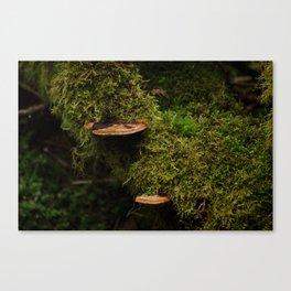Wood Mushroom Canvas Print