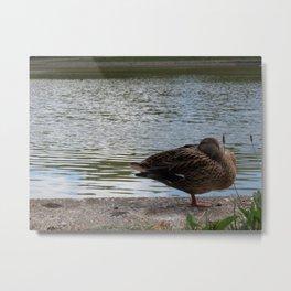Vienna Schonbrunn Duck Metal Print