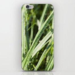sun-lit grass iPhone Skin