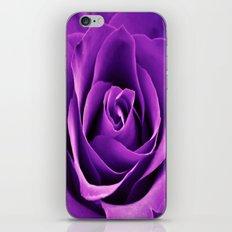 Purple Passion Rose iPhone & iPod Skin
