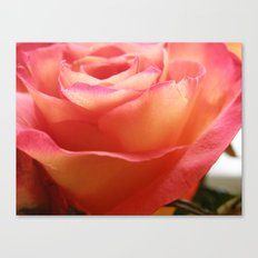 Two-Tone Roses #3 Canvas Print
