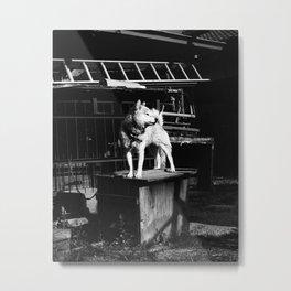 Akita Metal Print
